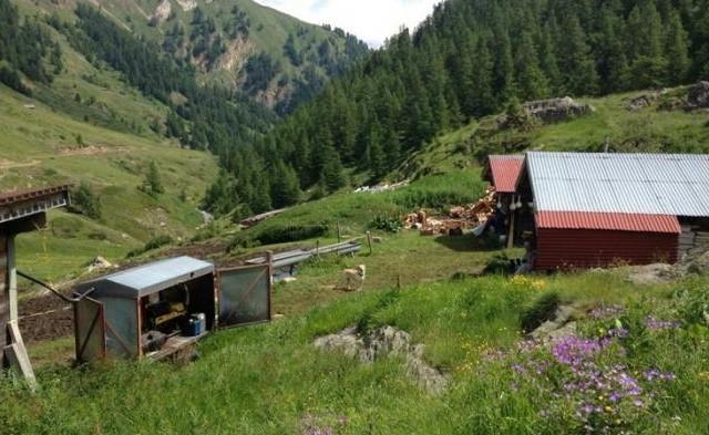 Alpe Furggen