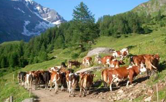 Alpe Majing